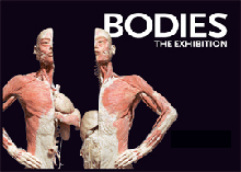 Bodies the Exhibition Tickets Bodies the Exhibition Las Vegas Tickets